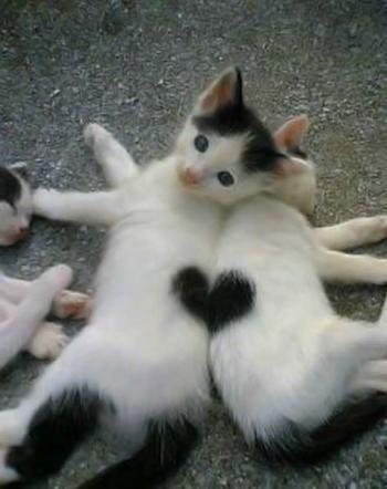 二匹がくっついた瞬間にだけできる、ハート! 二匹で一つ、という愛の絆の強さを感じます。 カ~ワイイ!