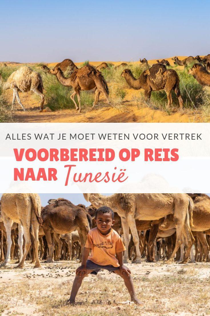 Voorbereid Op Reis Naar Tunesie Alles Wat Je Moet Weten Voor Vertrek Tunesie Op Reis Reis