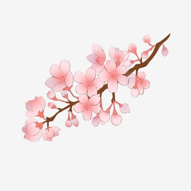 Spring Cherry Blossom Branch Illustration Cherry Blossom Clipart Branches Cherry Blossoms Pink Flowers Png Transparent Clipart Image And Psd File For Free Do Cherry Blossom Branch Cherry Blossom Tattoo Shoulder Cherry