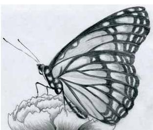 dibujos a lapiz de mariposas - ALOjamiento de IMágenes