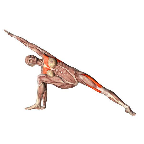 Extended right side angle pose - Utthita Parsvokonasana right - Yoga Poses   YOGA.com