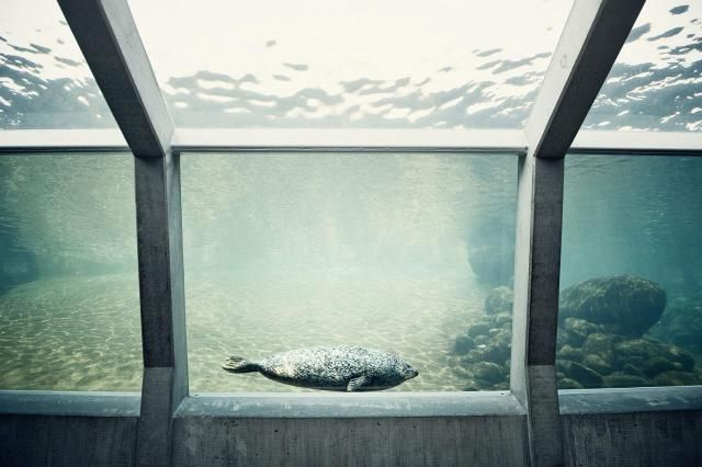 Small Business Idea - Aquarium Maintenance