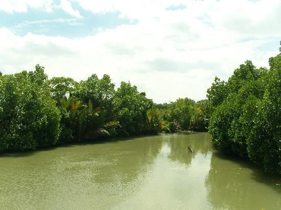 Hutan bakau muara sungai bencaran, Madura