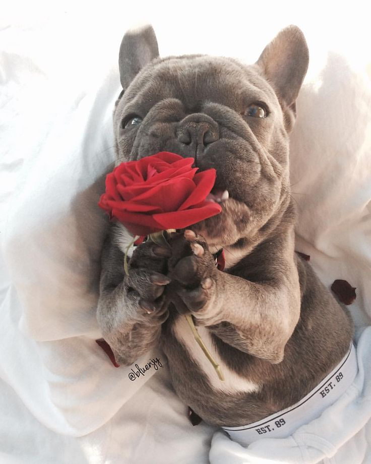 74.6k Followers, 3,089 Following, 1,468 Posts - See Instagram photos and videos from Frenchiestore (@frenchiestore)
