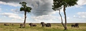 Most people don't realize the many activities that Tanzania has to offer as a holiday destination. Although it is most well-known for the game-filled plains of the Serengeti, there are many more activities to keep you busy whilst traveling this incredible country: check out this link on our blog for more info. http://untamedodyssey.com/blog/what-to-see-and-do-in-tanzania/#more-738