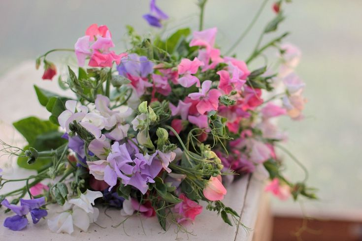 Sweet peas come in lots of different colors.  We would grow white and soft pink for you.