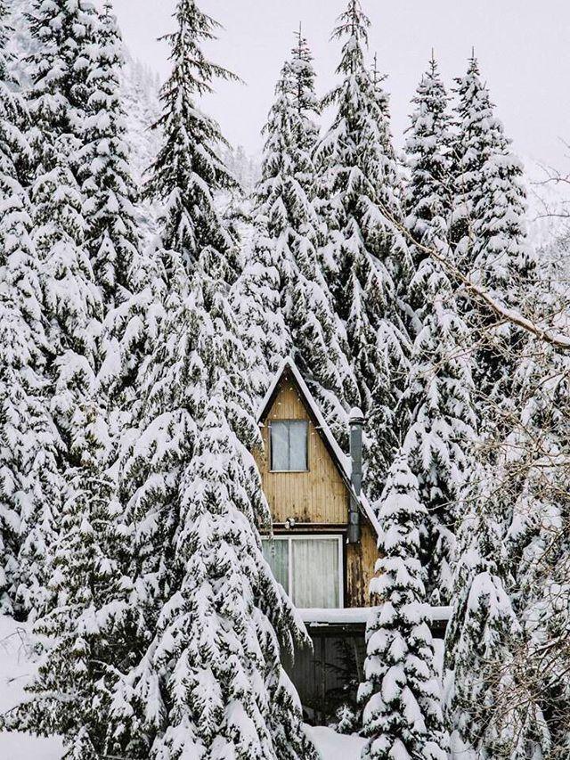 snowy a frame.