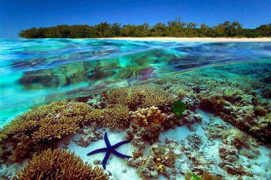 The colorful Great Barrier Reef, off the coast of northern Queensland