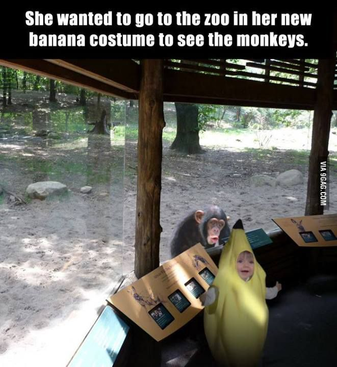 look at the monkeys face!!!