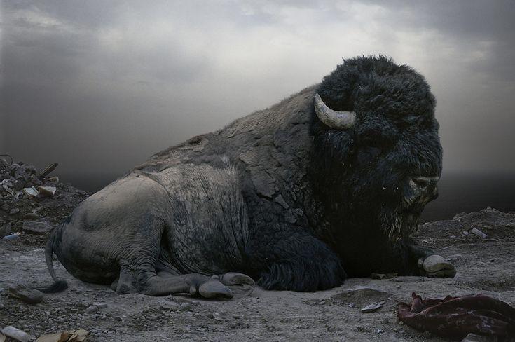 Simen Johan - Until The Kingdom Comes bison