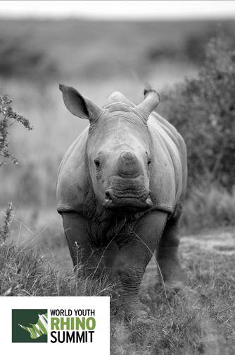 9 days time! #RhinoSummit2014 www.youthrhinofund.com  #wildlife #nature #rhino