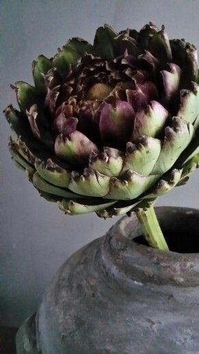 Artisjok ♡ de eenvoud en de robuuste vorm maakt deze bloem aansprekend.