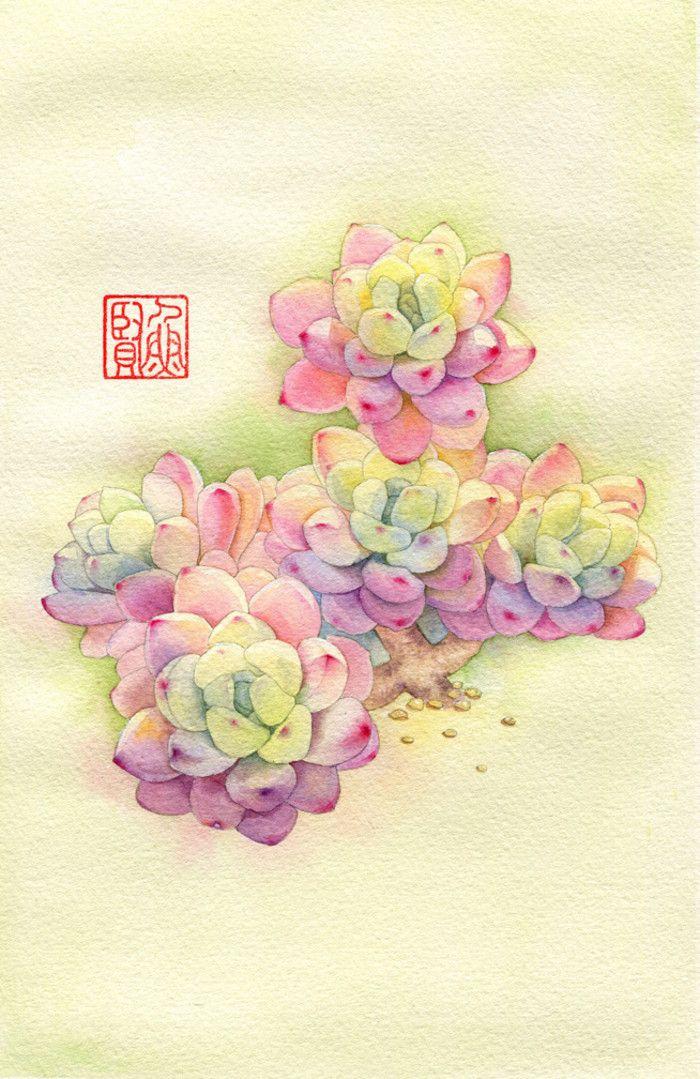 多肉植物 插画 风景 人物 森系 手绘 水彩 涂鸦 星空 唯美 意境 背景 二次元 小清新 治愈系