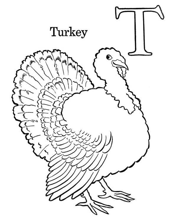 Turkey Is For Letter T Coloring Page Coloring Pages Horse Coloring Pages Heart Coloring Pages