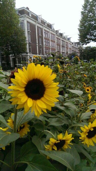 Amsterdam Zoo, Artis: ode to Vincent van Gogh