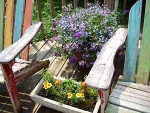 Patio/Deck Plants