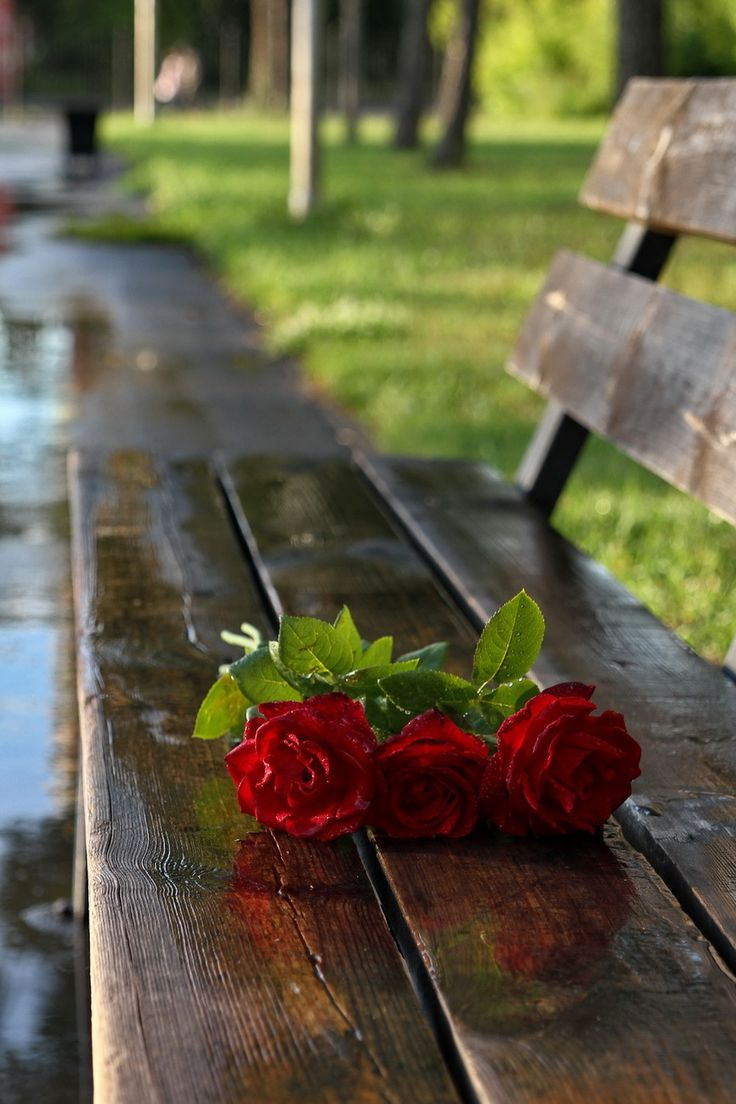 мелирование цветы на скамейке фото год юбилея