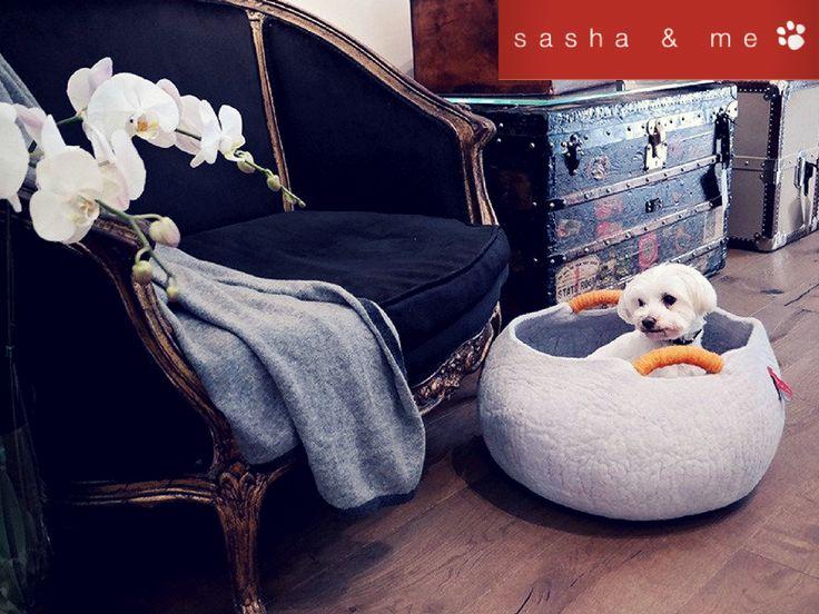 CIRCO BASKETS DOG #luxury dog beds australia, #designer dog beds, #luxury dog beds, #designer dog beds australia, #stylish dog beds, #designer dog accessories australia, #luxury pet beds, #designer dog bed, #best dog beds, #designer dog accessories, #boutique dog beds, #luxury dog bed, #trendy dog beds, #organic dog bed, #luxury dog beds online, #dog beds australia, #large luxury dog beds, #designer pet accessories, #dog pod beds, #dog accessories australia, #dog blankets australia…