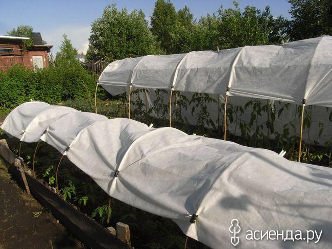 Помидоры под укрытием: Группа Практикум садовода и огородника