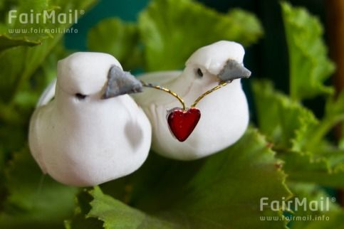 Two Turtle Doves in Love Photographed by Akaash Ram - India - FairMail - Fair Trade Photos - IAKR-0287