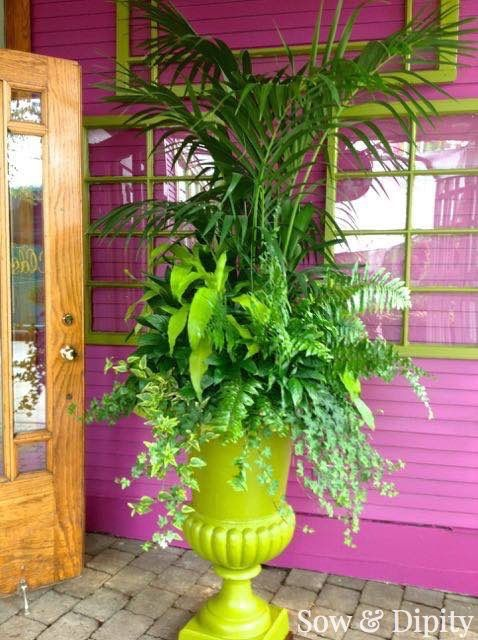 Go all green and stay tropical like they did here with a palm and some ferns.  { Strive to balance the plant's colors with the pots' colors - If you will be planting plants that have mostly uniform green foliage, you can generally get away with very brightly colored containers. http://www.wikihow.com/Match-Colors-and-Pots-in-Container-Gardening }