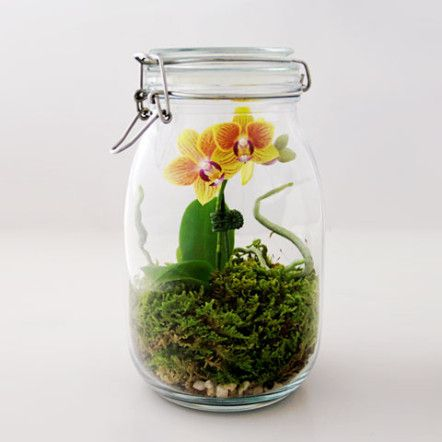mason jar orchid terrarium greenery nyc - and many other cute terrarium ideas
