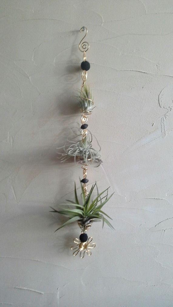 40 best tillandsia images on pinterest air plants plants and terrariums. Black Bedroom Furniture Sets. Home Design Ideas