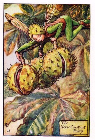 Horse Chestnut Flower Fairy Vintage Print c1927  Cicely Mary Barker