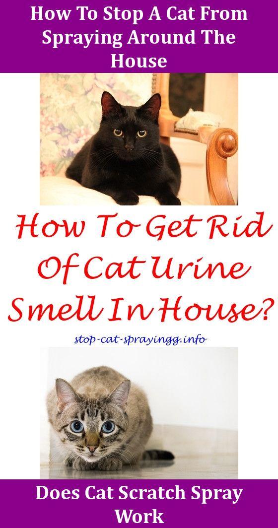 4efabfb659969d49b6d25854a865e27b - How To Get Rid Of Cat Spray Smell Under House