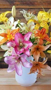 Kolorowe lilie w wazonie