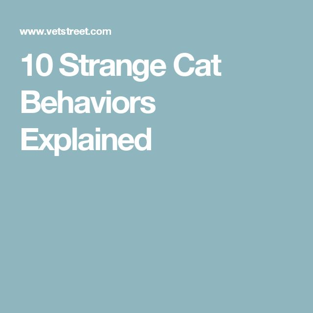10 Strange Cat Behaviors Explained