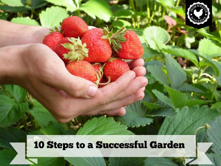 10 Tips For A Successful Vegetable Garden From Scratch