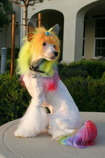☀opawz.com   supply pet hair dye,pet hair chalk,pet perfume,pet shampoo,spa products....