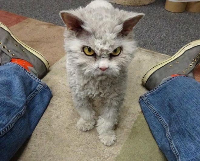 Самый хмурый кот на свете