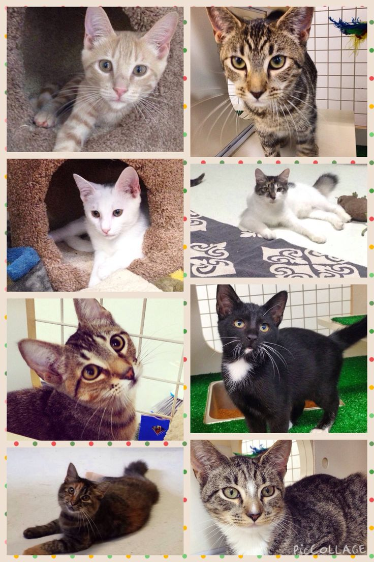 These kittens are available for adoptions thru Cat Haven