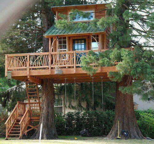 Gorgeous natural wood home wrapped in between two trees. Tree house and tiny house reunite.