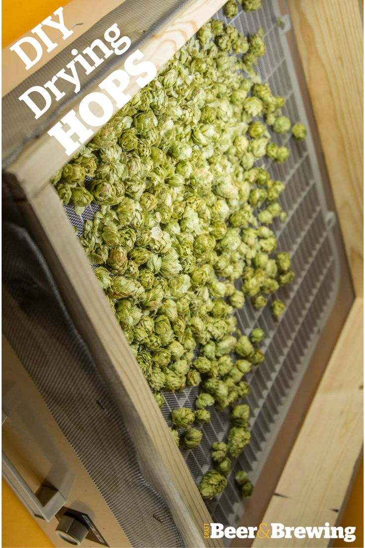 142 best everything hops curated by talkingbeers images on