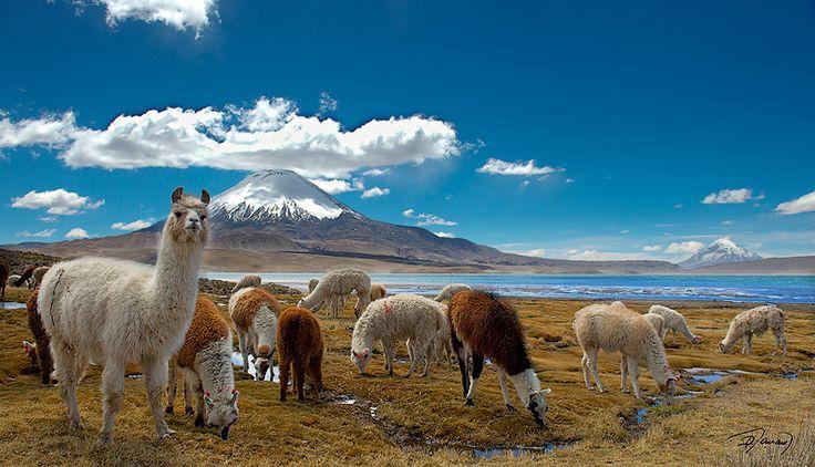 Chungará Lake and Parinacota Volcano, Arica Region, Chile.