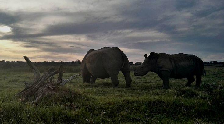 An evening drive at Kragga Kamma game park, Port Elizabeth