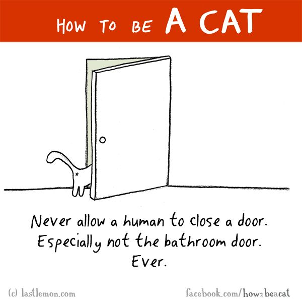 HOW TO BE A CAT: Never allow a human to close a door. Especially not the bathroom door. Ever.