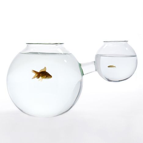 1000 Ideas About Glass Fish Bowl On Pinterest Peace Lily Terrarium And Aquaponics
