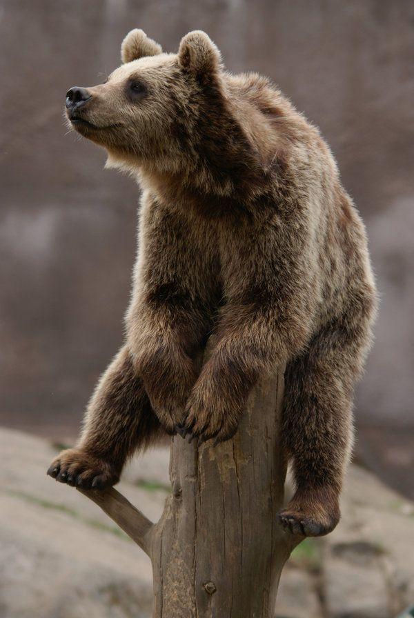 Картинки, картинка медвежонка прикольная