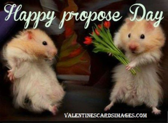 Hi guys, happy propose day  so how are you today? Whats your propose day plan? Going to propose him/her today or have something else in your naughty mind? Lets tell me your plan how are will propose a girl? or how you propose a boy? I think just few girls are going to propose him, so lets discuss only how you will propose a girl? Do you have some special idea's? Do you need my help? Okey, no issues I will help you. http://www.valentinescardsimages.com/