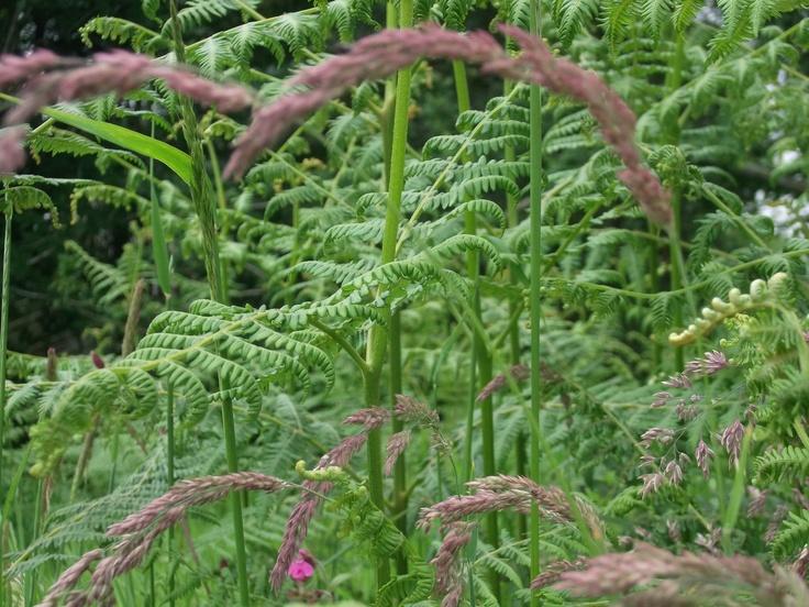 Purple moor grass & bracken