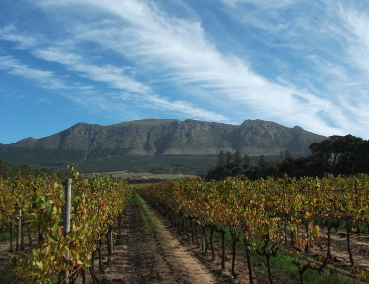The beautiful Constantia Uitsig vineyard, Constantia, Cape Town, South Africa