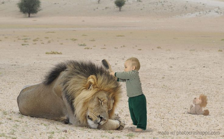 Lion Tamer by Mark Grant on 500px | Modele dessin, Dessin, Insolite