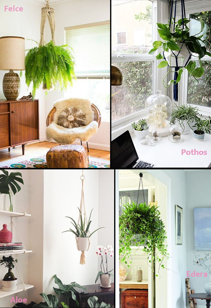Oltre 25 fantastiche idee su Vasi da appendere su Pinterest  Cesto da giardi...