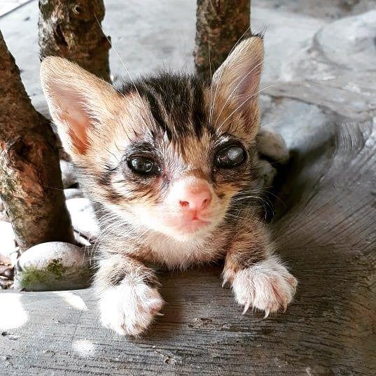 Lekas sehat lagi yah Lala! Dokternya optimis si kicik sembuh Ownernya optimis sembuh si Kicik pun kudu lebih optimis bisa sembuh               #cat #cats #cat_ #cats_ #catrescue #cat_dog #cat_lover #cat_lovers #catlove #catlover #catlovers #cats_of_instagram #cat_of_instagram #cat_fotografia #cats_of_instworld #cats_on_instagram #kucing #kucinglucu #kucingcomel #kitten #kittens #dokterhewan #klinikhewan #vet #veterinarian #veterinarymedicine