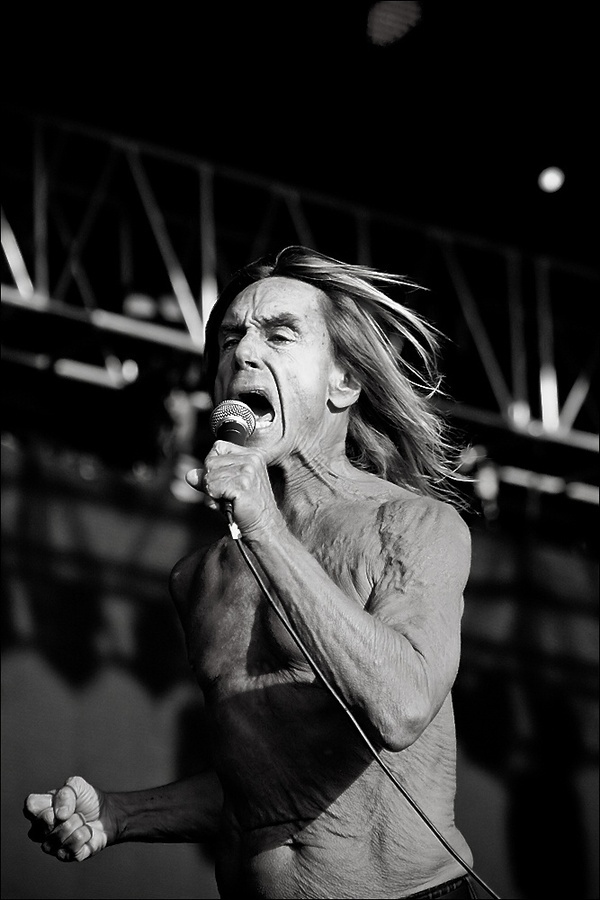 268 best La Iguana Iggy Pop images on Pinterest  Iggy