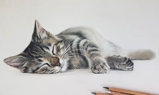 Tabby Cat Drawing In Pastel Pencil Fabercastell Tabbycat Pastelartist Catdrawing Petportraits Realistic Drawings Cat Drawing Art Challenge